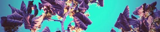 cropped-image8.jpg